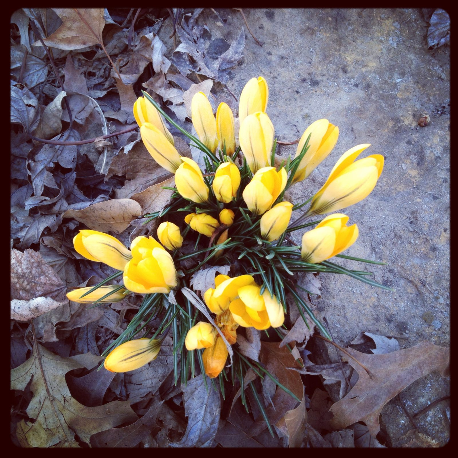 Springtime for Coleman Highlands!